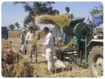Stromerzeugung aus Senfernteresten in Indien